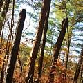 Woodlands by Joe  Martin