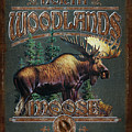 Woodlands Moose by JQ Licensing