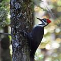 Woodpecker by Ann Keisling
