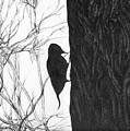 Woodpecker by Anna  Duyunova
