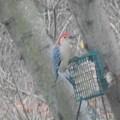 Woodpecker by Darlene Custer