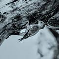 Woodpecker - El Salvador by Totto Ponce
