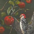 Woodpecker In Apple Tree by Jan Dappen