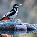 Woodpecker In Backlight by Torbjorn Swenelius