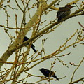 Woodpecker by Patrick  Short