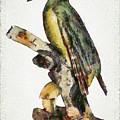Woodpecker Red Heads by Sergey Lukashin