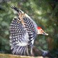 Woodpecker Wings by Kerri Farley