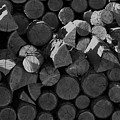 Woodpile 2 by LKB Art and Photography