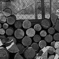 Woodpile by LKB Art and Photography