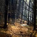 Woods by Aline Kala