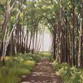 Woods by Caroline Philp