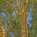Woods by Dennis Dugan