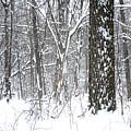 Woods In Winter by Stephen Becker