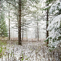 Woods In Winter At Retzer Nature Center  by Jennifer Rondinelli Reilly - Fine Art Photography