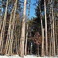 Woods In Winter by Michiale Schneider