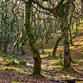 Woods Near Badgeworthy Water Exmoor by Pete Hemington