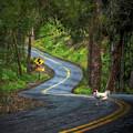 Woods Road 1 - Summer by Robert Pratt