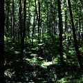 Woods by Robin Lynne Schwind