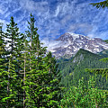 Woods Surrounding Mt. Rainier by Don Mercer