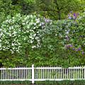 Woodstock Village Lilacs by Alan L Graham
