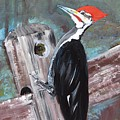 Woody - The Pileated Woodpecker by Jan Dappen