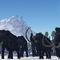 Woolly Mammoth by Corey Ford