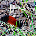 Wooly Bear 1 by Don Baker