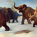 Wooly Mammoths Near The Somme River by Mountain Dreams