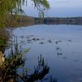 Worden's Pond 3 by Steven Natanson