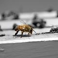 Worker Bee by Alana Krantz