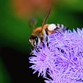 Worker Bee by Betty LaRue