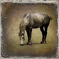 Working Horse by Sari Sauls