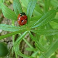 World Of Ladybug 3 by Jean Bernard Roussilhe