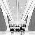 World Trade Center Transportation Hub, Lower Manhattan New York by Edi Chen