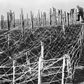 World War I Barbed Wire by Granger