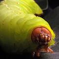 Worm by Ken Howard