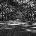 Wormsloe Plantation 2 Live Oak Avenue Art by Reid Callaway