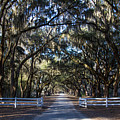 Wormsloe Avenue #2 by Robert J Caputo