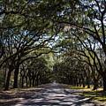 Wormsloe Avenue by Robert J Caputo