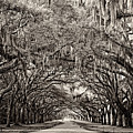 Wormsloe by Heather Applegate