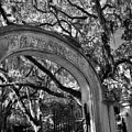 Wormsloe Historic Site Isle Of Hope Ga Black And White by Lisa Wooten