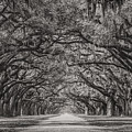 Wormsloe Plantation by Chilehead Photography