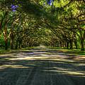 Shadows Of Wormsloe Plantation Oak Avenue Georgia Art by Reid Callaway