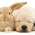 Puppy Bunny Love by Warren Photographic