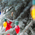 Wrap A Tree In Color by Lora Lee Chapman