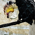 Wreathed Hornbill Perching Against Vintage Concrete Wall Backgro by Sharon Minish