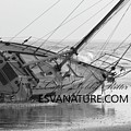 Wrecked Sailboat by Captain Debbie Ritter