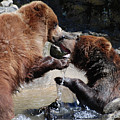 Wrestling Grizzly Bears In A Shallow River by DejaVu Designs