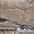 Written Prayers Western Wall by Thomas R Fletcher