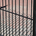 Wrought-iron Gate And Shadows by William Kuta